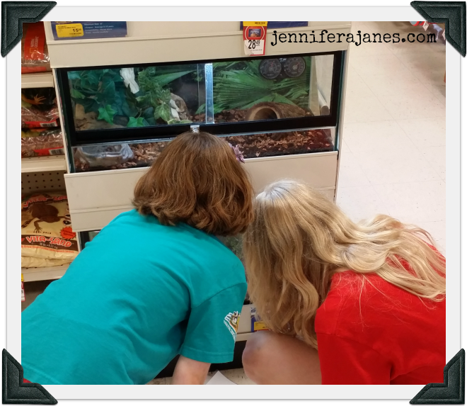 Studying reptiles at the pet store - jenniferajanes.com