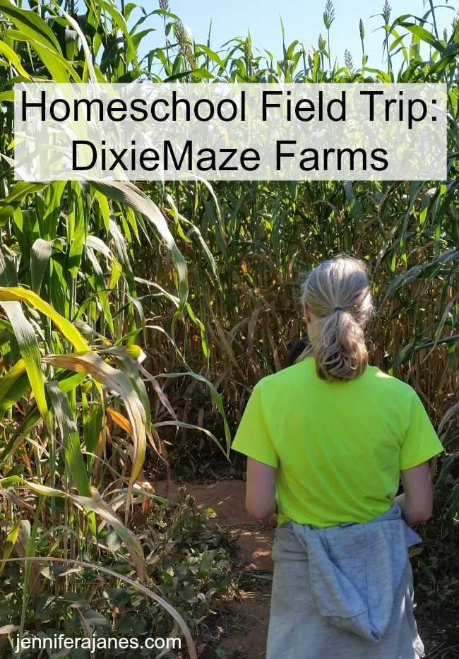 Our field trip to DixieMaze Farms was both fun and educational. It's much more than a corn maze!