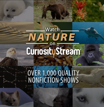 Watch Nature on CuriosityStream